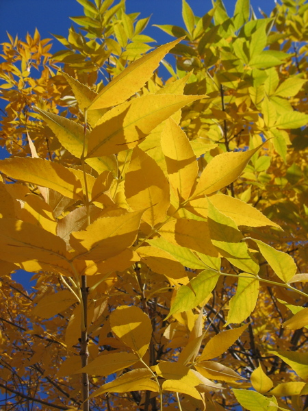 Autumn%20Yellow.jpg