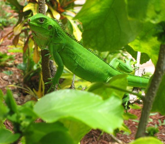Iguana%20Green.jpg
